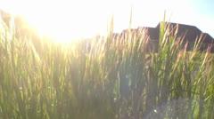 Grass - stock footage
