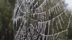 Spider Web With Water Drops Stock Footage