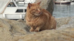 Snoozing ginger cat on the seaside rocks Stock Footage