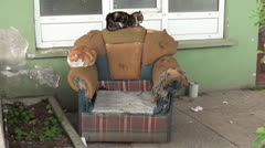 Two cats on scuffed armchair Stock Footage