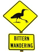 Nz attention bittern crossing road sign on white Stock Photos