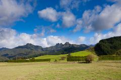 coromandel peninsula nz mountain pasture scenery - stock photo