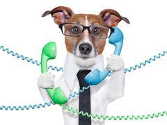 business dog - stock illustration