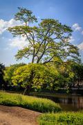 Stock Photo of Crooked tree