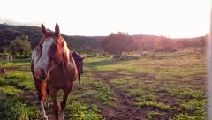 Horses Coming Home Stock Footage