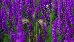 Field Of Globe Flowers On A Summer Meadow Stock Footage