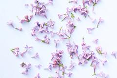 Stock Photo of springtime lilac background, close up