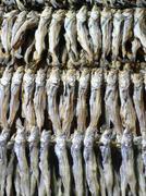 dried sardines - stock photo