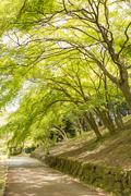 Stock Photo of green trees in park