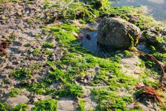 The sea shore by the low tide Stock Photos