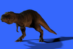 T-Rex in FS  Growling  at Prey Stock Footage