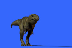T-Rex Growling and walks Stock Footage