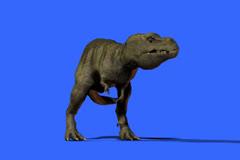 T-Rex Suspicion Stock Footage