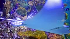 aquarium with stingray - stock footage