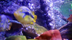 Colorful aquarium Stock Footage