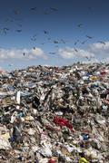 Birds flying over landfill Stock Photos