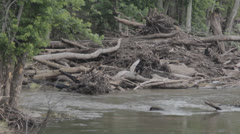 HD Stock Footage 1080p - River Scene after flood Stock Footage