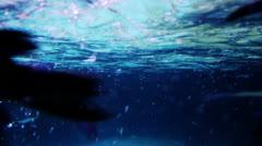 Penguins swim in an aquarium Stock Footage
