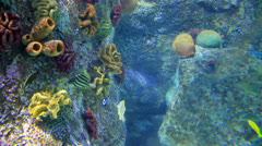 Underwater scene with colorful fishes Stock Footage