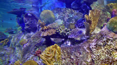 Underwater scene Stock Footage