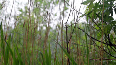 Stock Video Footage of summer rain in Europe, among foliage and a cane