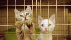 Kittens Inside Animal Shelter Cage Stock Footage