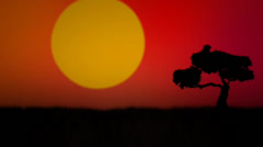 Red African / Australian Sunset Stock After Effects