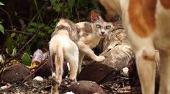 Stray Cat and Dog Stock Footage