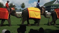 Poso Elephants 2 Stock Footage