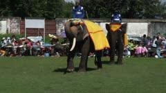 Poso Elephants 4 Stock Footage