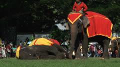 Poso Elephants 15 Stock Footage