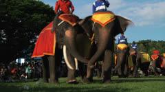 Poso Elephants 17 Stock Footage