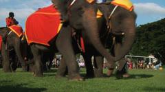 Poso Elephants 18 Stock Footage