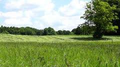 Farmland meadow Stock Footage
