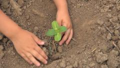 Child Hands Planting a Seed in Ground, Seedling Vegetables in Field, Agriculture Stock Footage