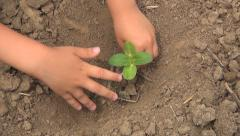 Child Hands Planting a Seed in Ground, Seedling Vegetables in Field, Agriculture - stock footage