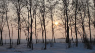 Stock Video Footage of Field and trees in winter with sunset