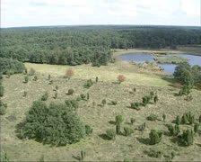 Aerial shot Shallow puddle or fen in moorland, The Netherlands - stock footage