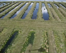 Aerial shot Small peat lakes, created by cutting and digging peat Stock Footage