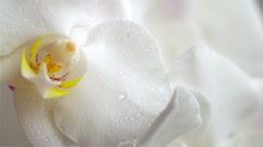 Water drops falling on white orchid flower, slow motion 03 Stock Footage