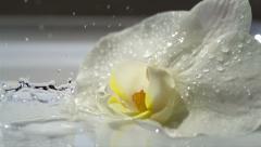 Water drops falling beside orchid flower,splash,crown,slow motion,2000 fps 19 Stock Footage