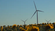 Wind Turbines in Agriculture Field, Windmill on Sunflower Land, Green Energy Stock Footage