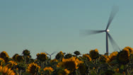 Stock Video Footage of Wind Turbines in Agriculture Field, Windmill on Sunflower Land, Timelapse