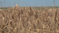 Stock Video Footage of Wind Turbines in Agriculture Field, Windmill on Wheat Land, Green Energy
