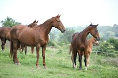Batch of horses standing on pasturage Stock Photos