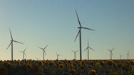 Stock Video Footage of Wind Turbines in Agriculture Field, Windmill on Sunflower Land, Green Energy