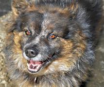 Furry dog expression Stock Photos