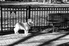 "Dog and ""no dogs please"" sign in federal hill park, baltimore, maryland. Stock Photos"