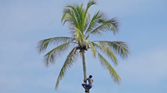 Bentota, sri lanka - apr 23: strong deft man picking coconut tree on apr 23, Stock Footage