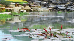 Pond in park during rain Stock Footage